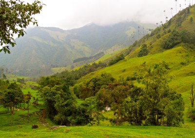 Valle Cocora Salento Colombia