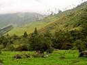 Salento Valle de Cocora Bike Trip Bicycle20 South America