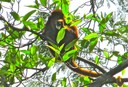 monkey on bike trip from valledupar to Guacochito Colombia.jpg