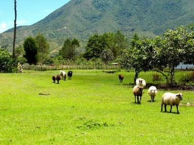 Nabusimake near Valledupar Colombia