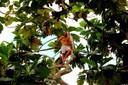 Ben in a tree in Pantoja
