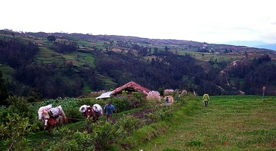 Camesinos walking home from the fields near Lamud Peru.jpg
